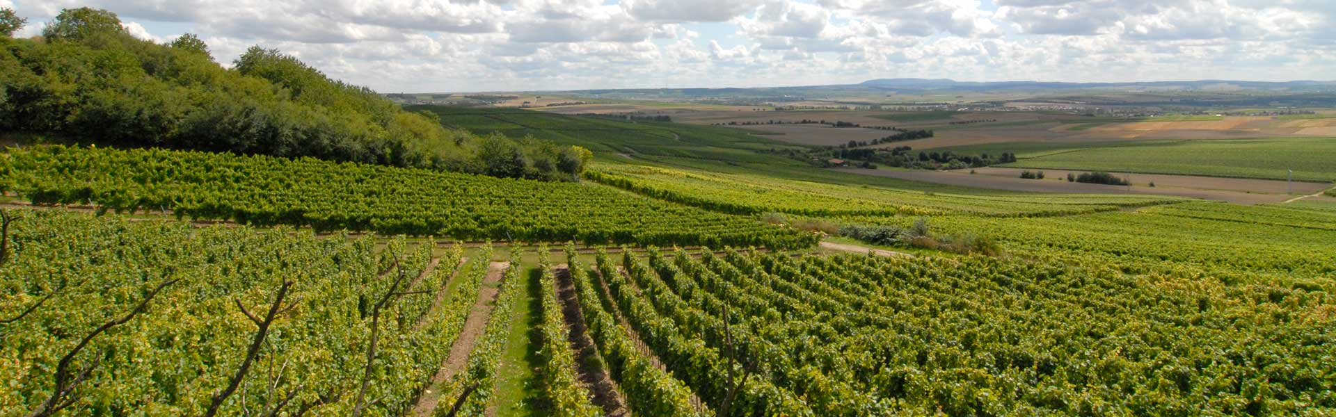 Germany's largest wine-growing region
